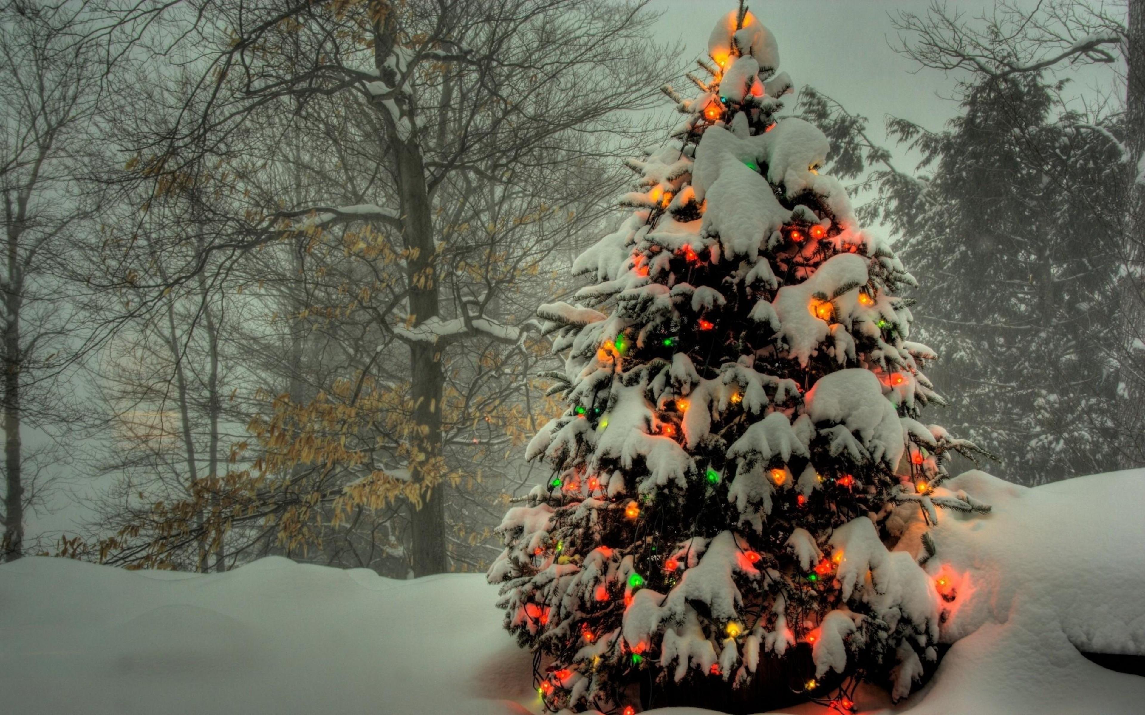 Christmas Tree 4k
