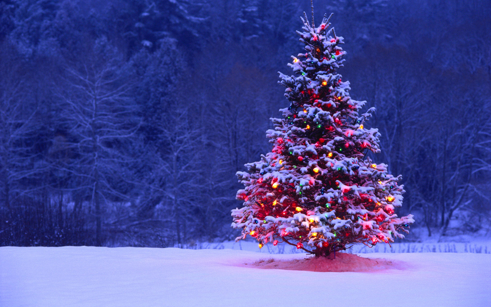 Christmas Tree Widescreen