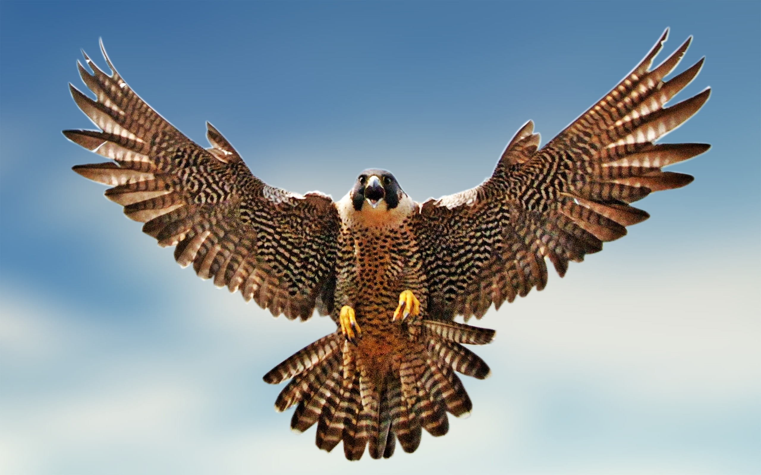 Falcon Background