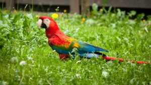 Macaw Background