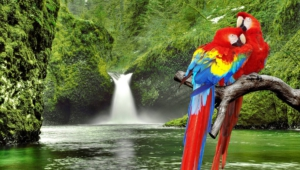 Macaw Computer Backgrounds