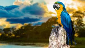 Macaw Desktop