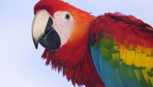 Macaw Download Free Backgrounds Hd