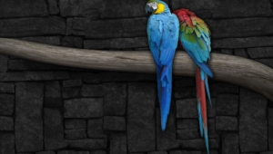 Macaw Hd Background