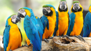 Macaw Hd Wallpaper