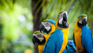 Macaw High Definition Wallpapers