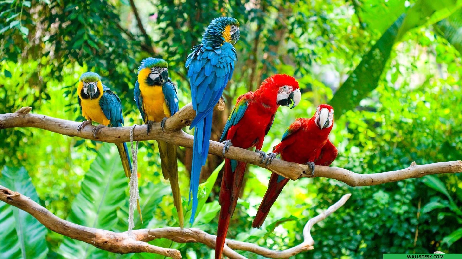 Macaw High Definition