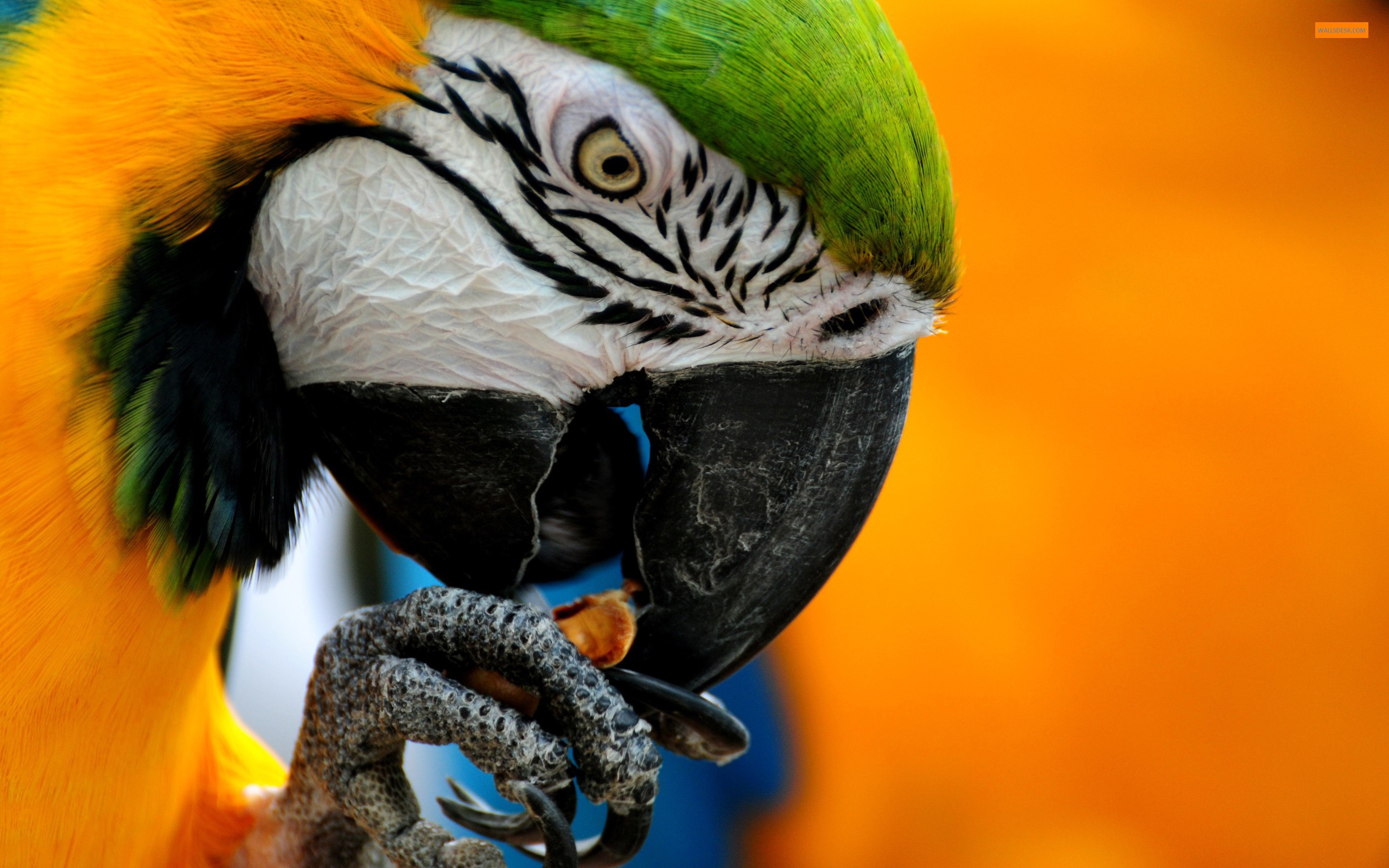 Macaw High Quality Wallpapers