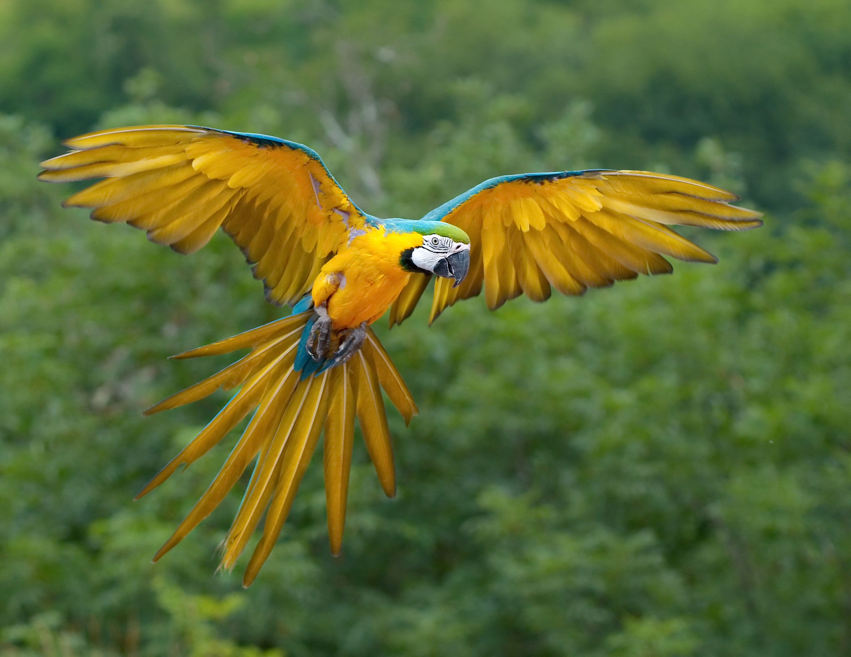 Macaw Sexy Wallpapers