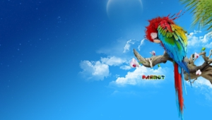 Macaw Wallpaper