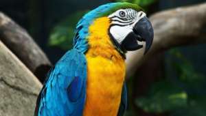 Macaw Wallpapers And Backgrounds