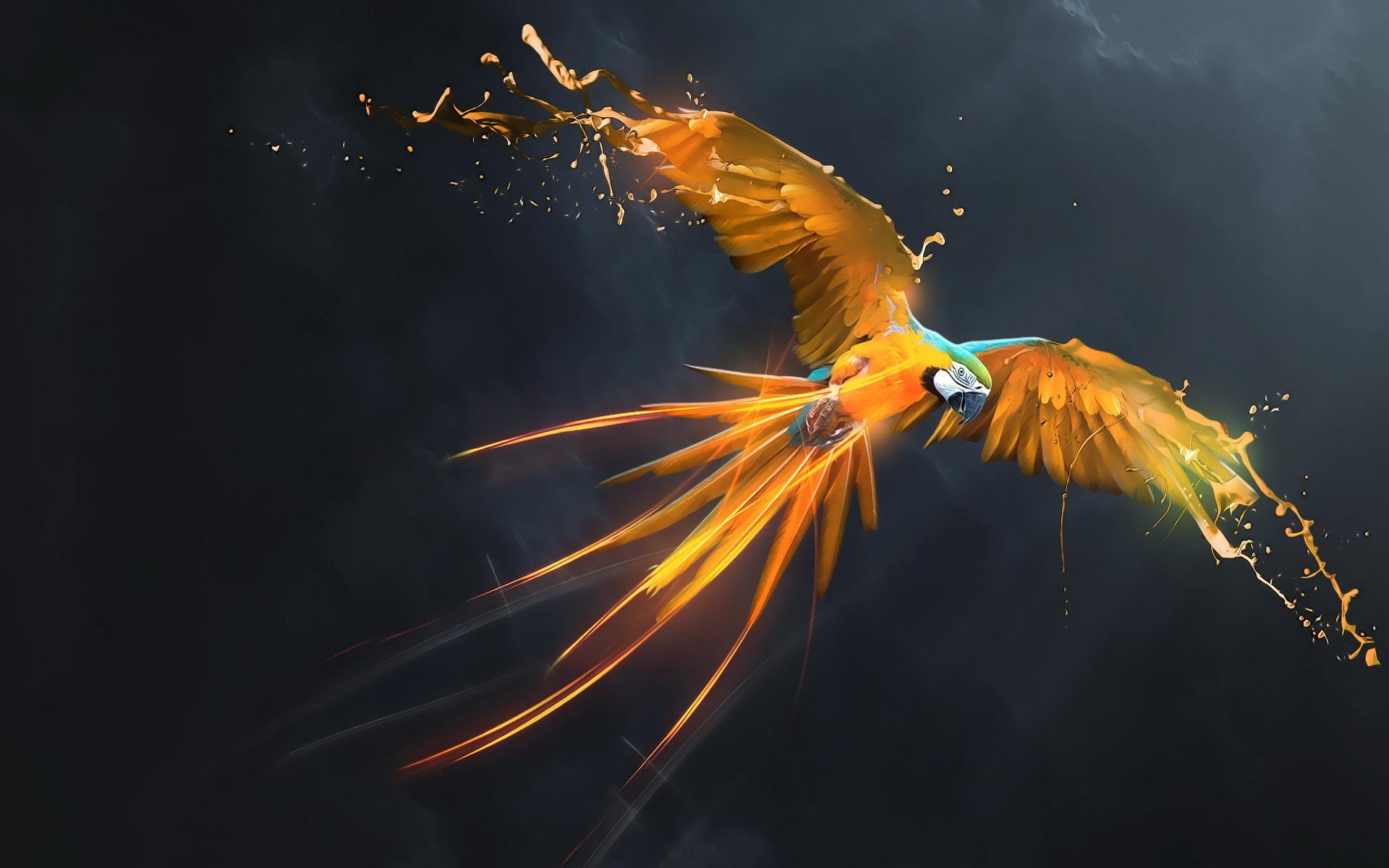 Macaw Full Hd