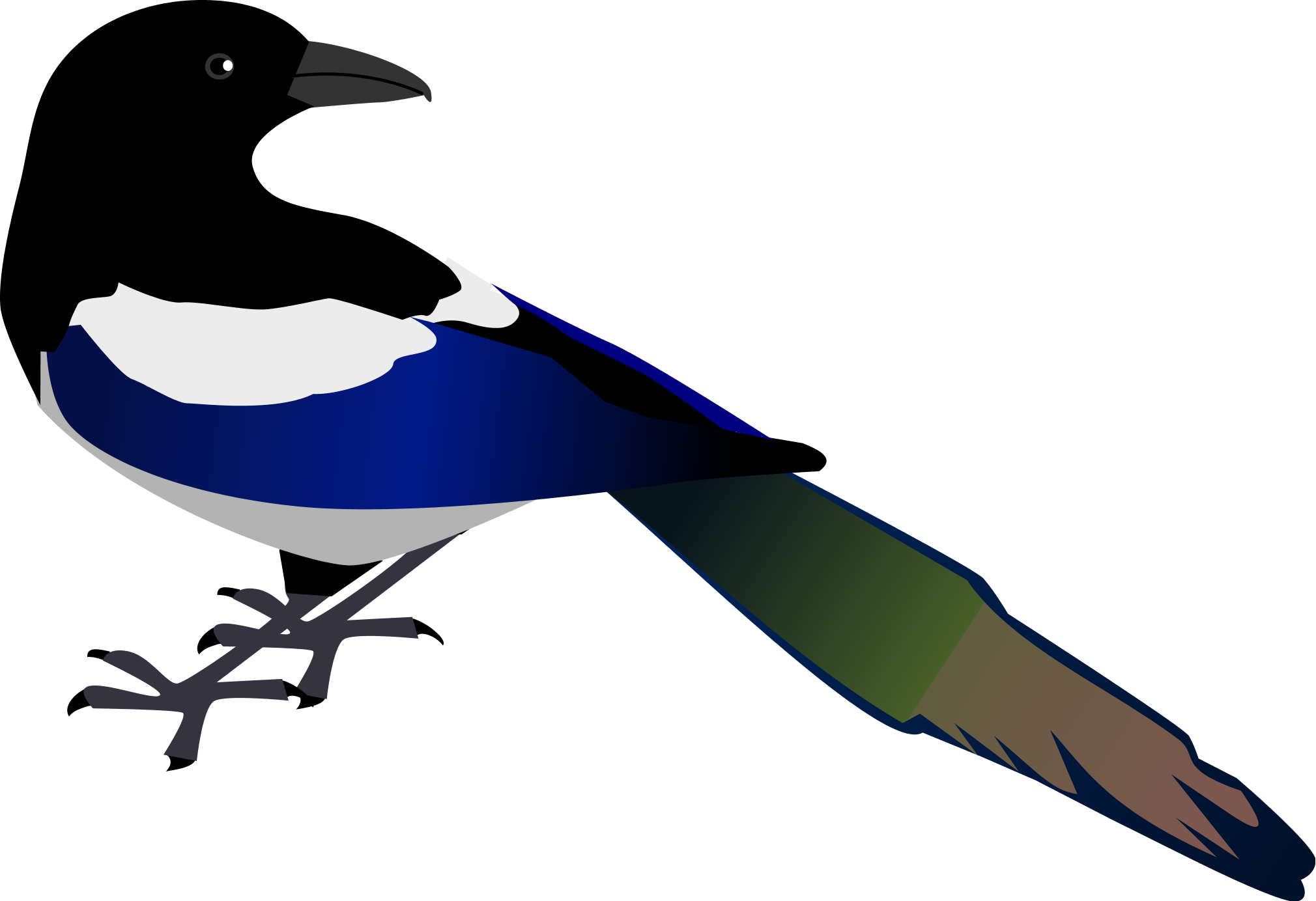 Magpie Hd Background