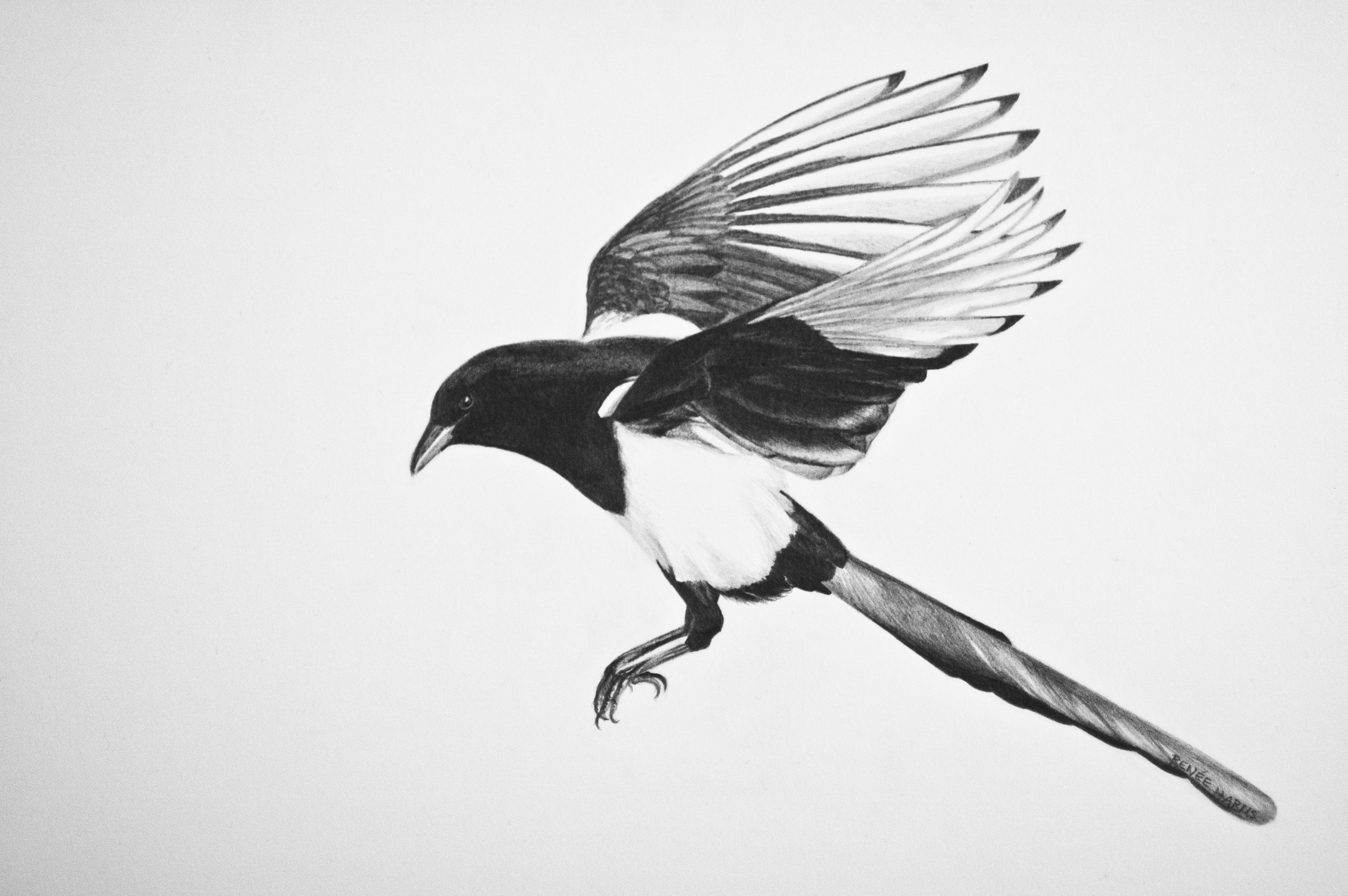 Magpie Wallpaper