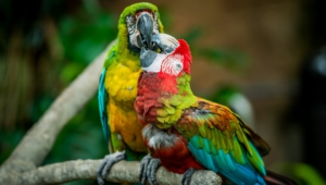 Pictures Of Macaw