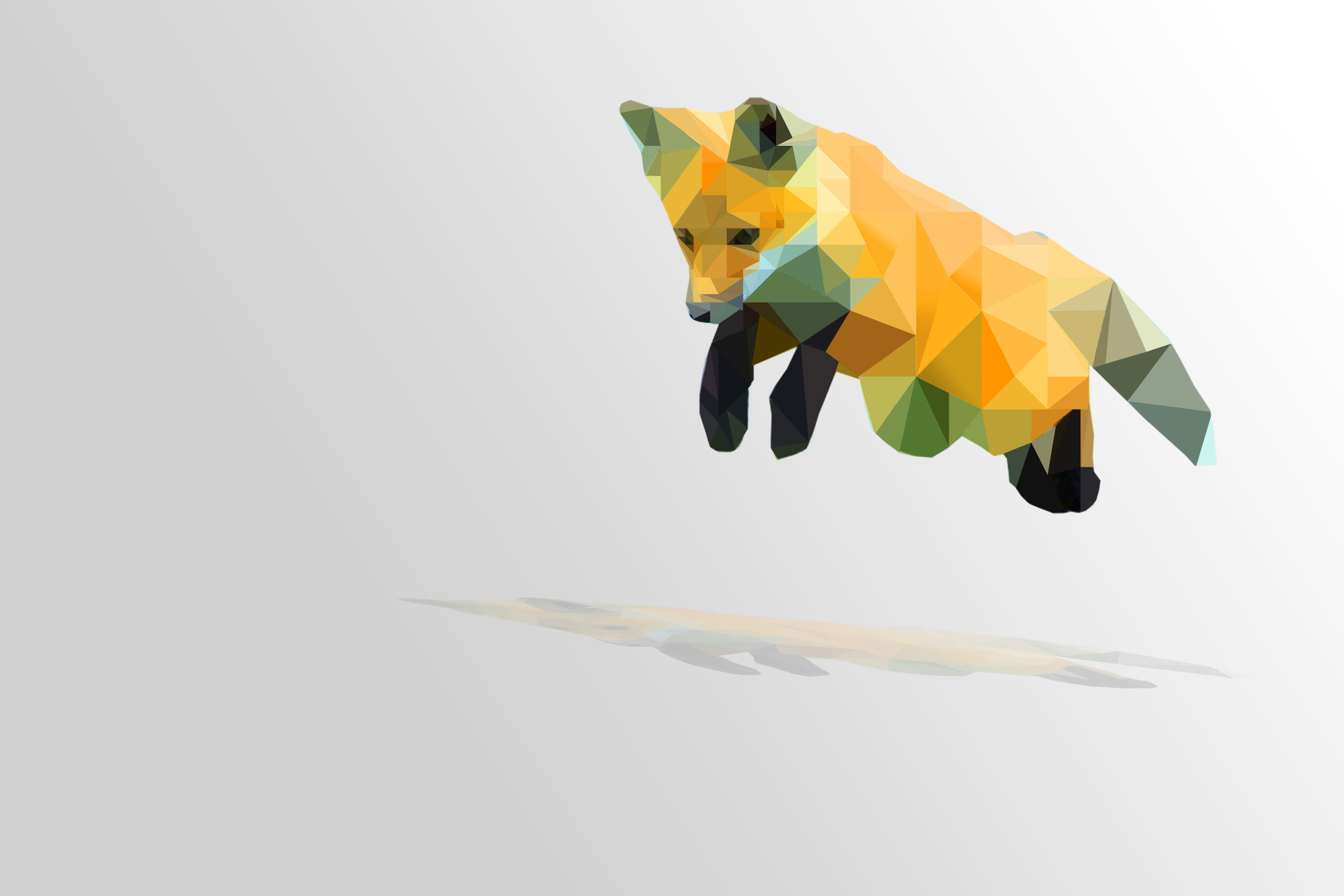 Pictures Of Polygon Fox