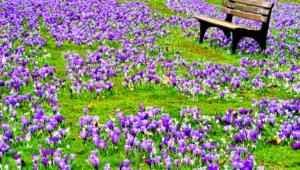 Spring 4k