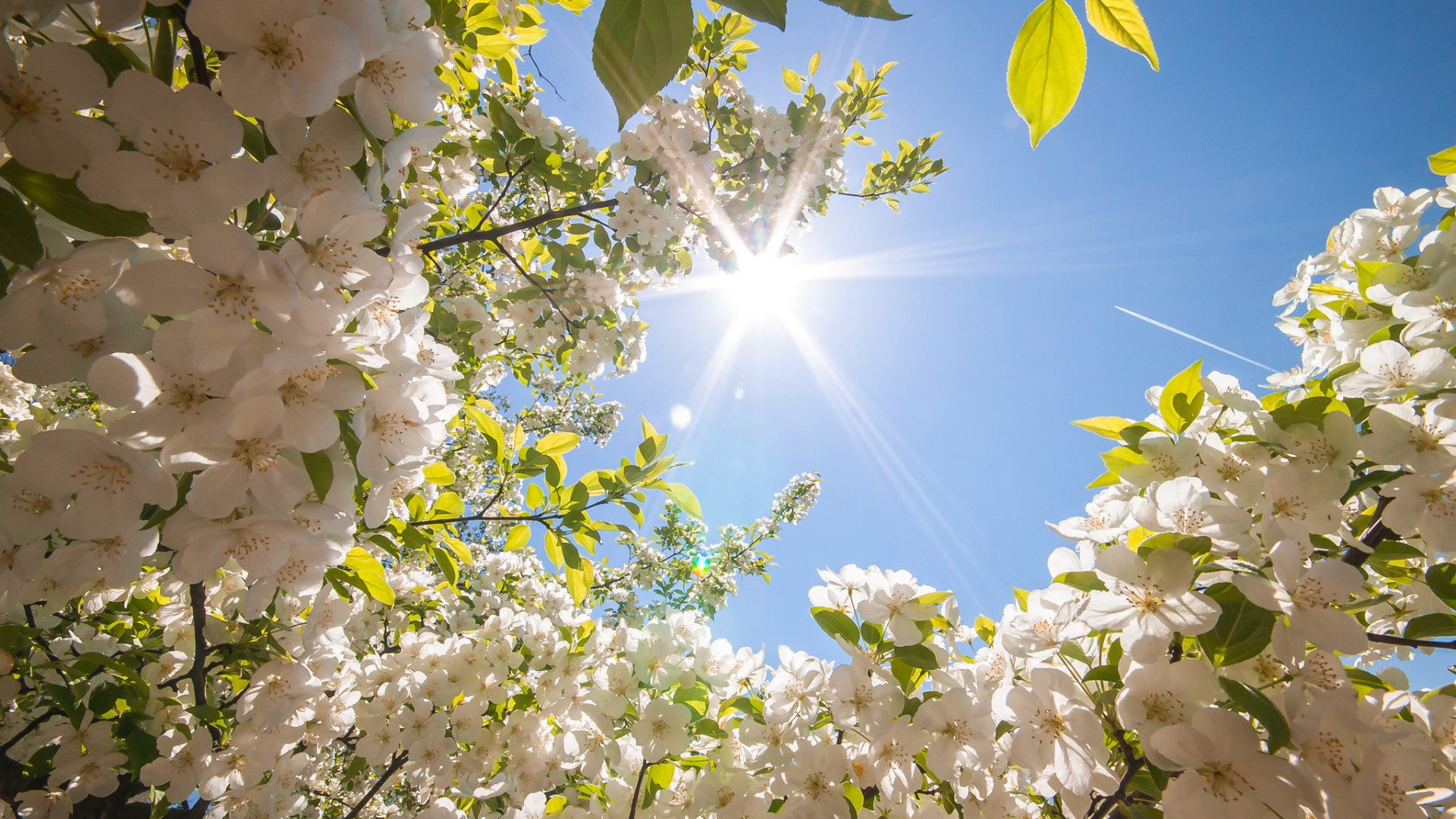 Spring Hd Background