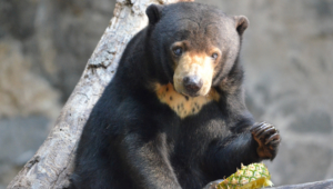 Sun Bear Hd Wallpaper