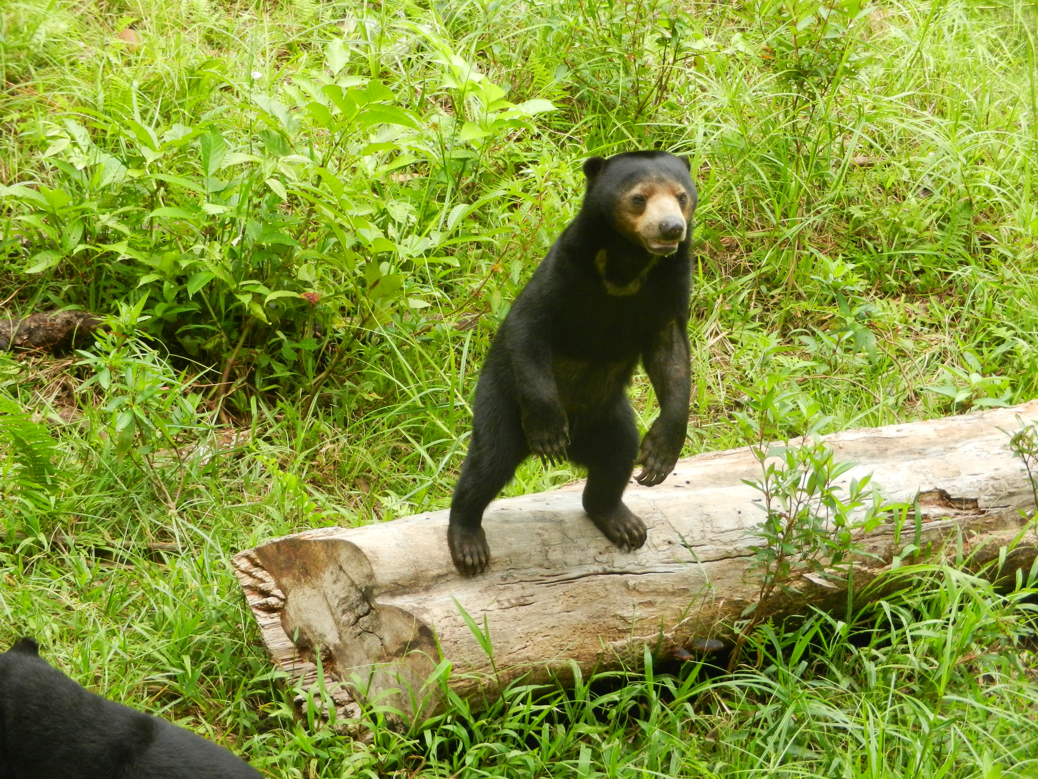 Sun Bear Pictures