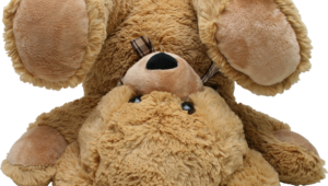 Teddy Bear Photos
