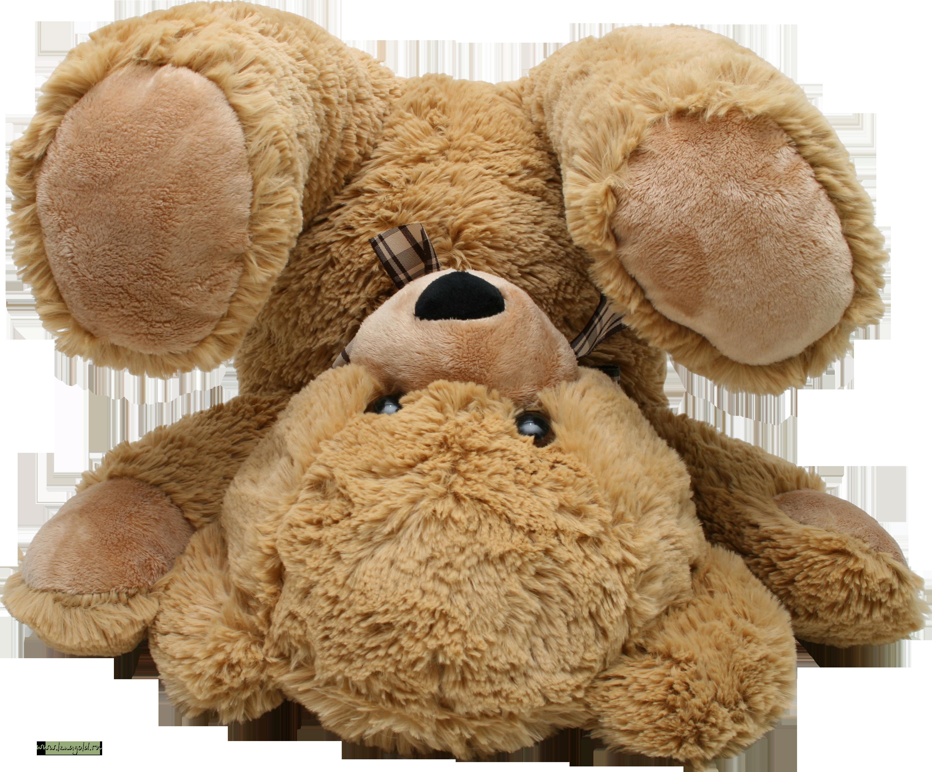 Teddy Bear Photos
