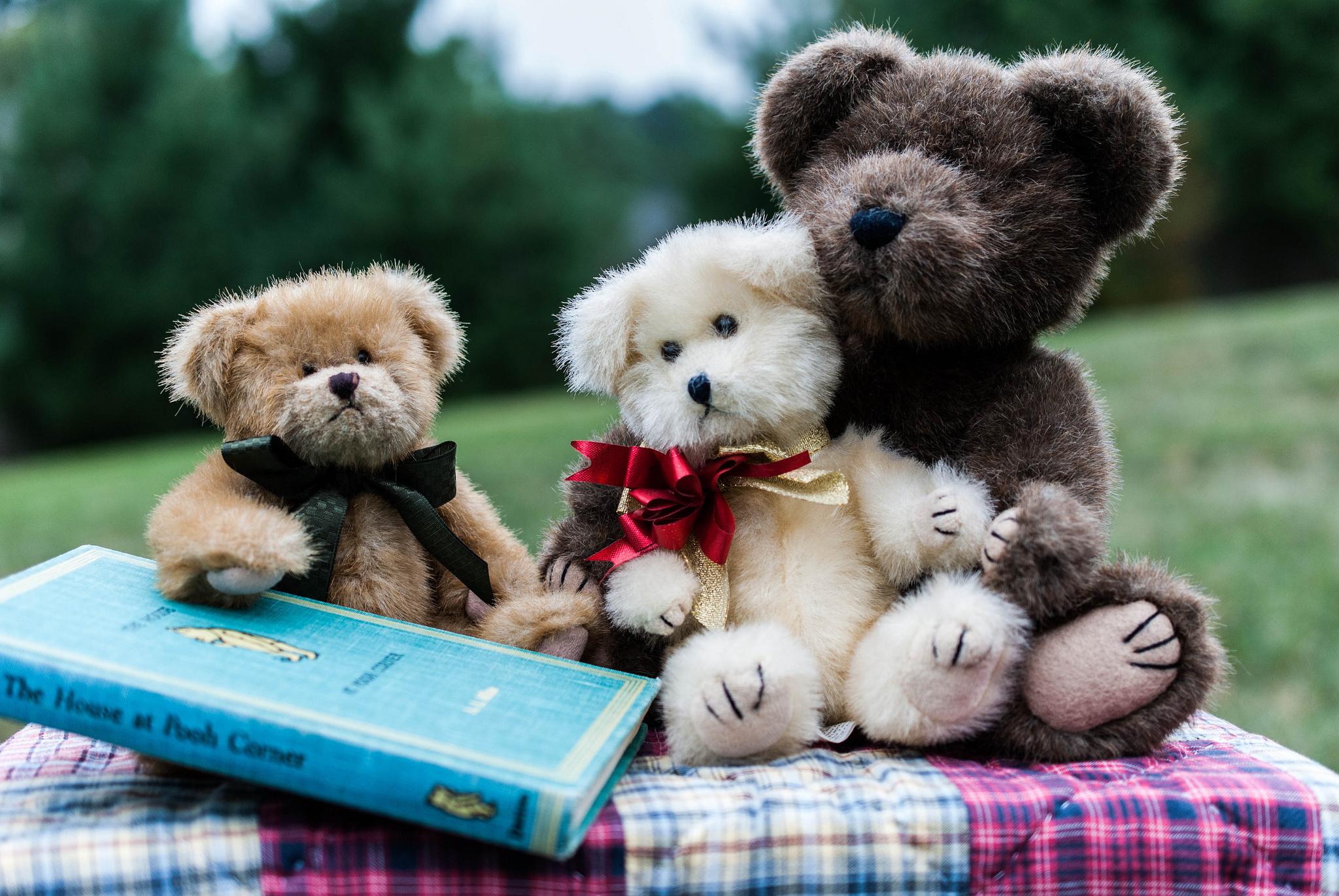 Teddy Bear Wallpapers Hd