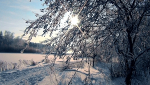 Winter Forest 4k