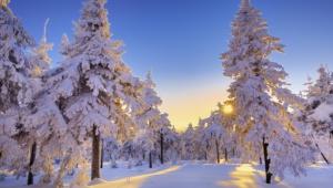 Winter Forest Background