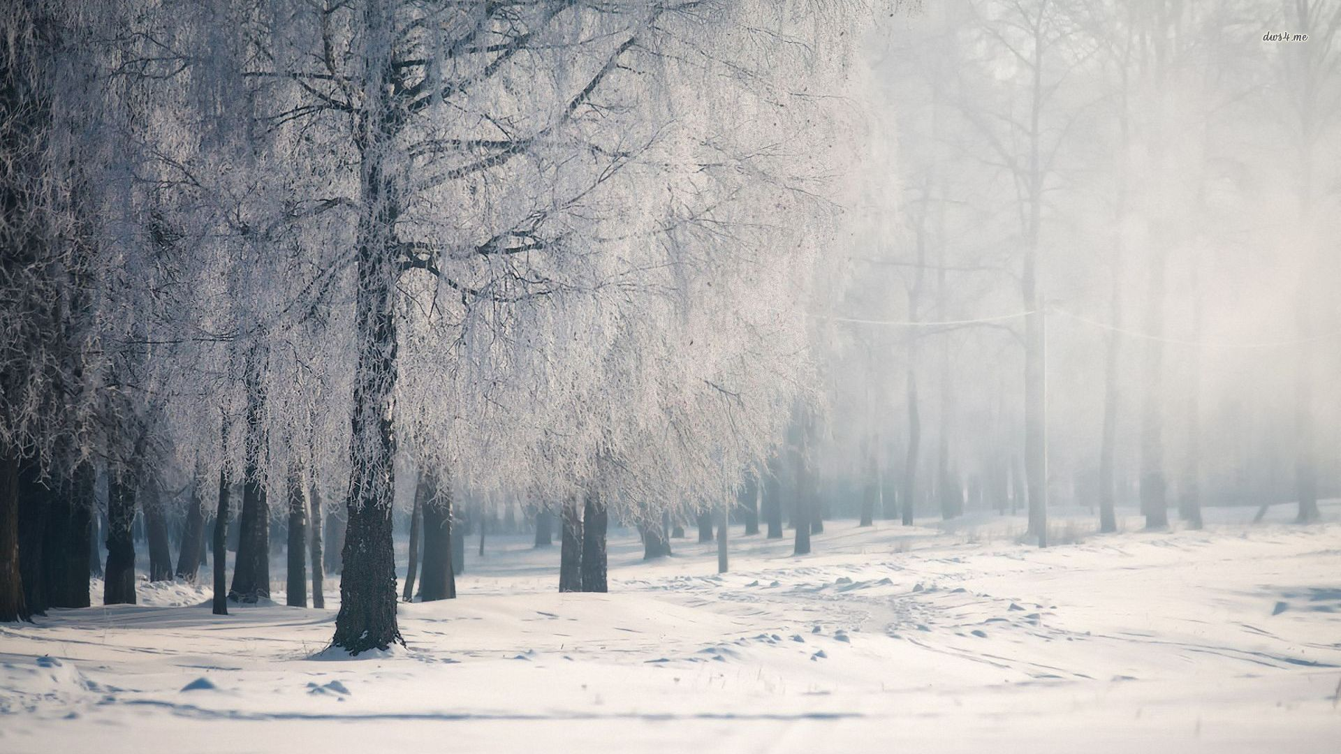 Winter Forest Computer Backgrounds