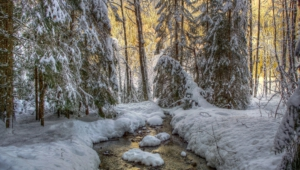 Winter Forest Hd Desktop