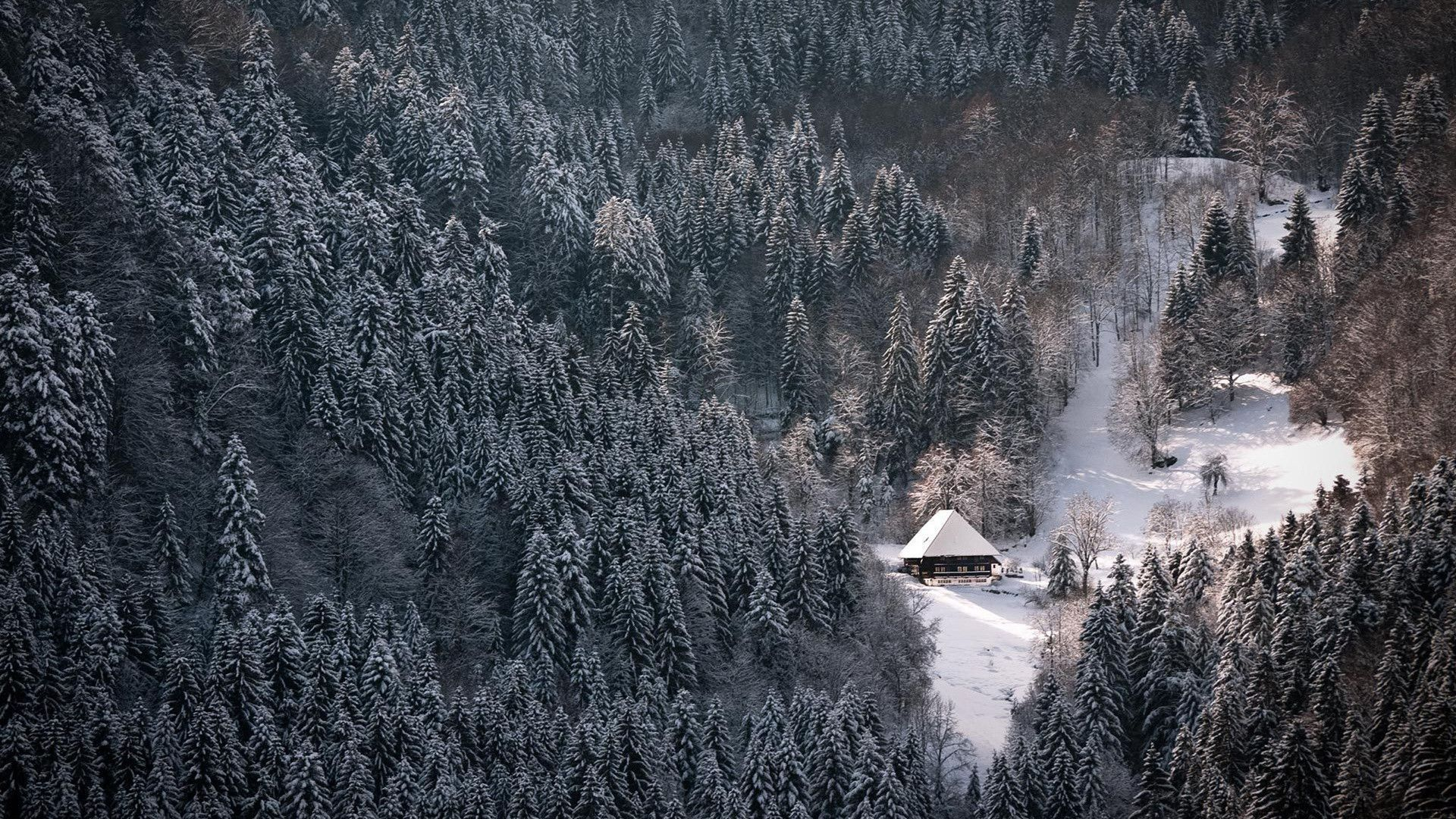 Winter Forest Hd Wallpaper