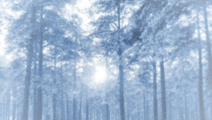 Winter Forest High Definition Wallpapers