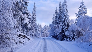 Winter Forest Images