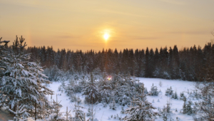 Winter Forest Pictures