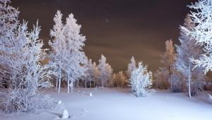 Winter Forest Wallpaper