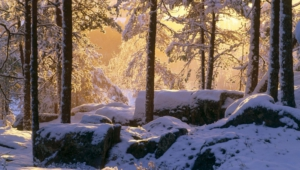 Winter Forest Wallpaper For Laptop
