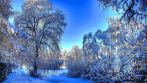 Winter Forest Wallpapers Hd