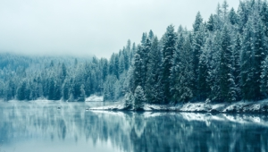 Winter Forest Widescreen