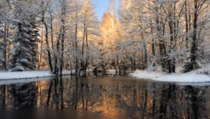 Winter Forest For Desktop