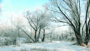 Winter Forest Full Hd