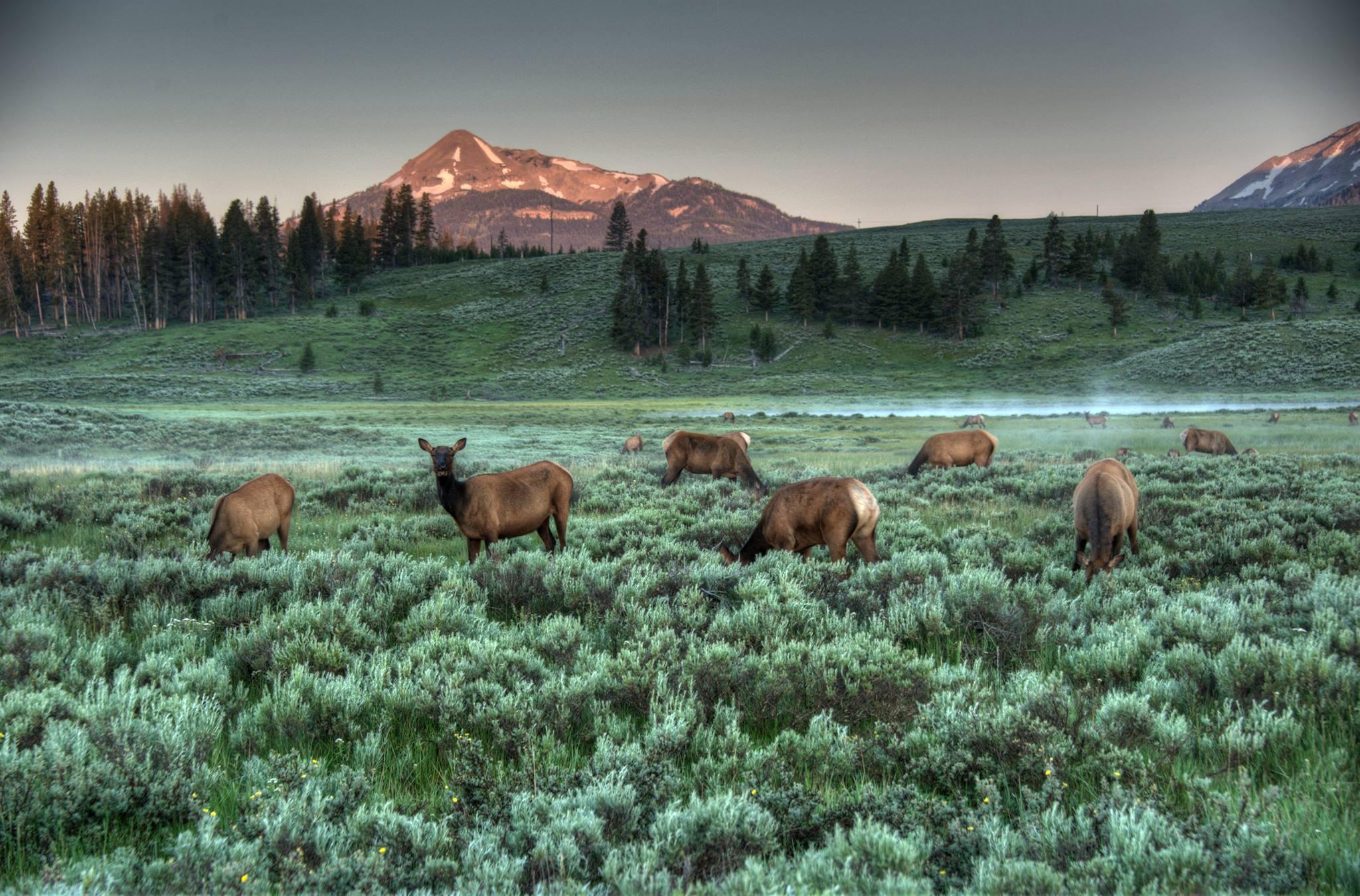 Yellowstone National Park Desktop