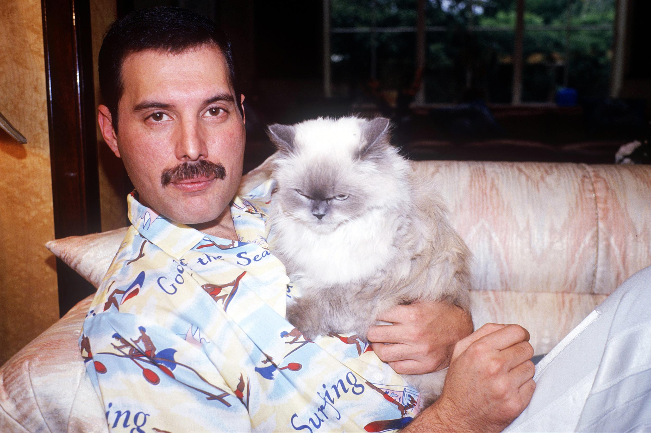 Freddie Mercury For Desktop