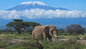 Mountain Kilimanjaro High Quality Wallpapers