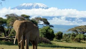 Mountain Kilimanjaro Photos