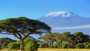 Mountain Kilimanjaro Wallpaper
