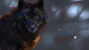 Black Wolf Photos