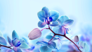 Blue Orchid Images