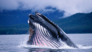 Blue Whale High Definition Wallpapers