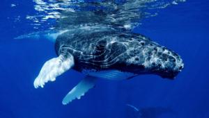 Blue Whale Photos